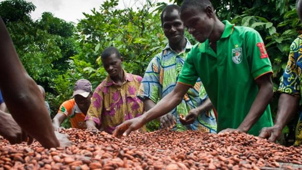 Cocoa farmgate prices