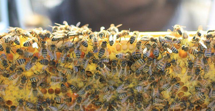 AfDB approves 343,000 dollars for honey production in Rwanda