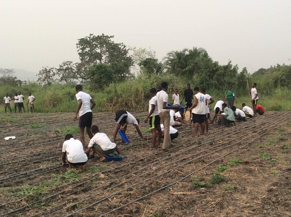 School children on one of the farms in the Volta region of Ghana. Photo: Lambert Atsivor / Africa Feeds Media