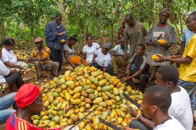 Ghana sets producer price of cocoa at $1500 per tonne