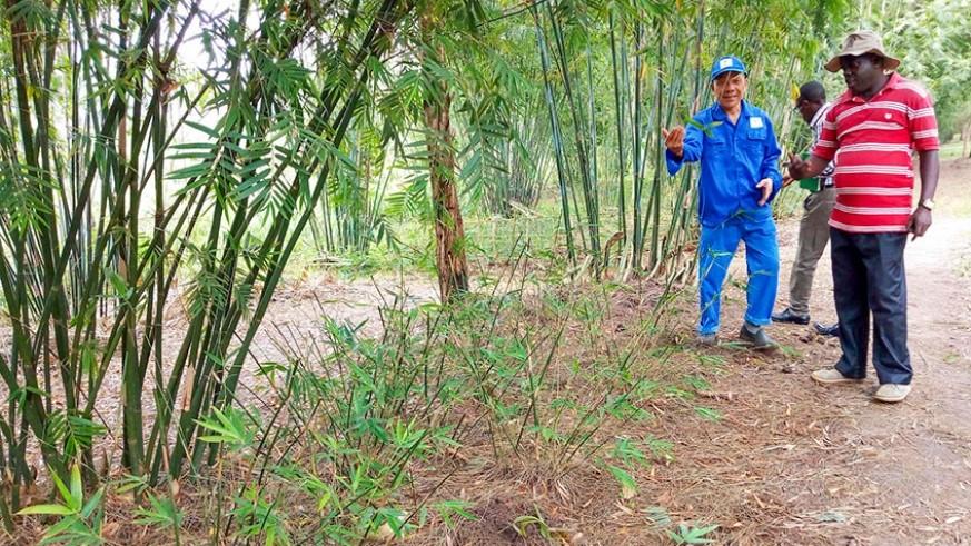 Bamboo greenhouse in Kigali, Rwanda