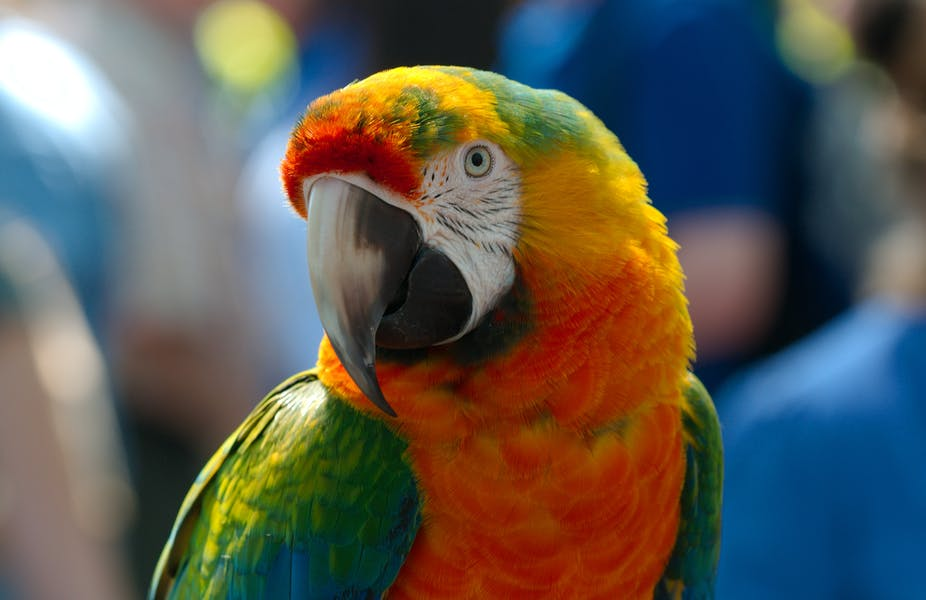 The parrot alerted its owner of the presence of police.