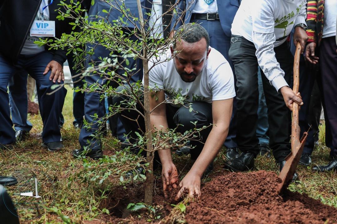 Ethiopia PM plants trees