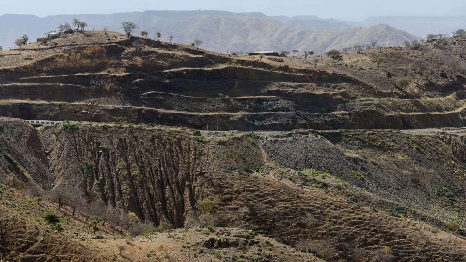 Ethiopia land tree