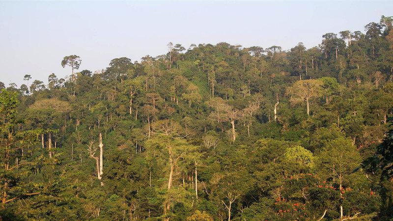 Atewa forest Ghana