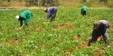 Small businesses in Agric sector