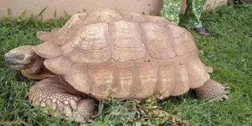 Oldest tortoise in Africa