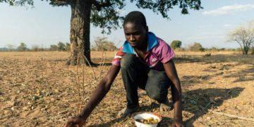 Food crisis in Zimbabwe