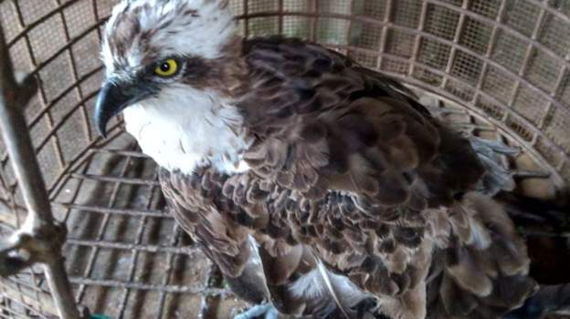 Migratory birds found in Ghana and Kenya
