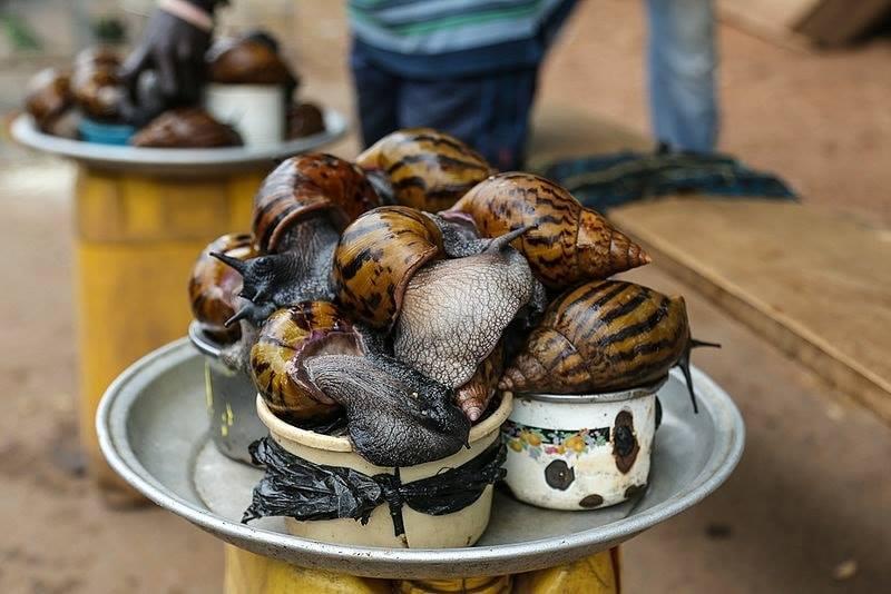 Trisolace Farms in Ghana