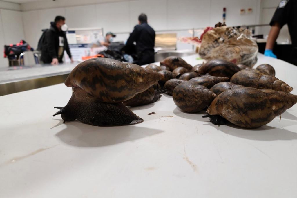 Snails at JFK Airport