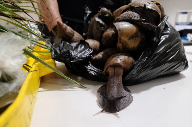 Snails in luggage at JFK airport