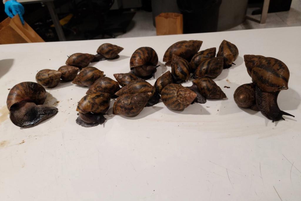 JFK snails